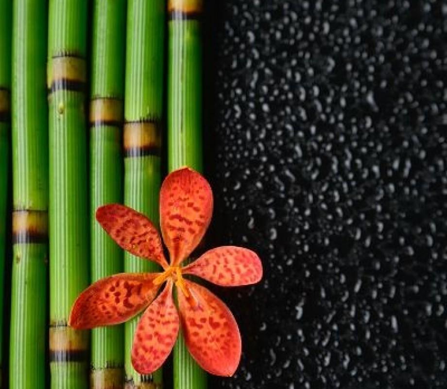 Бамбук и цветок орхидеи