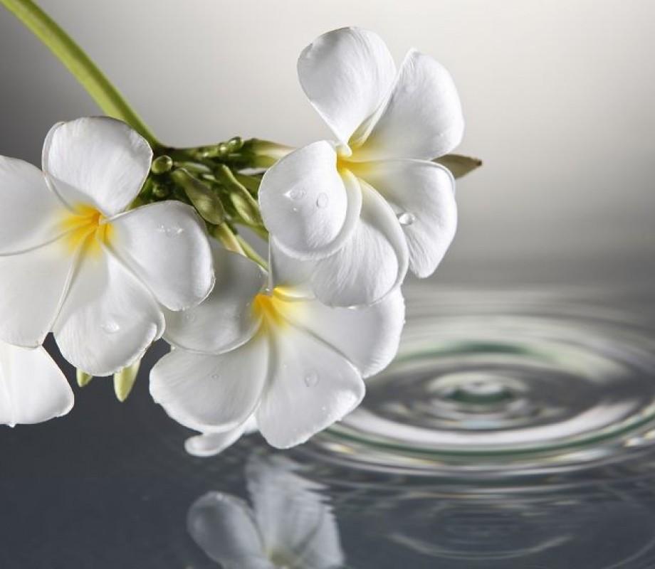 Гавайские цветы на воде