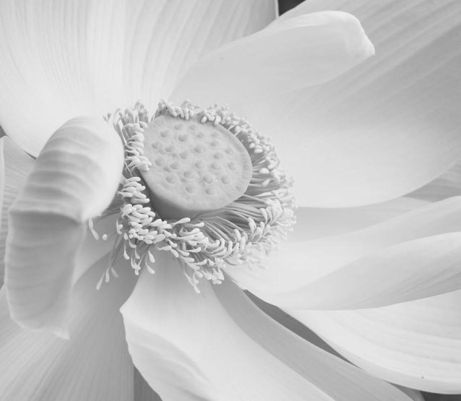 Крупный цветок