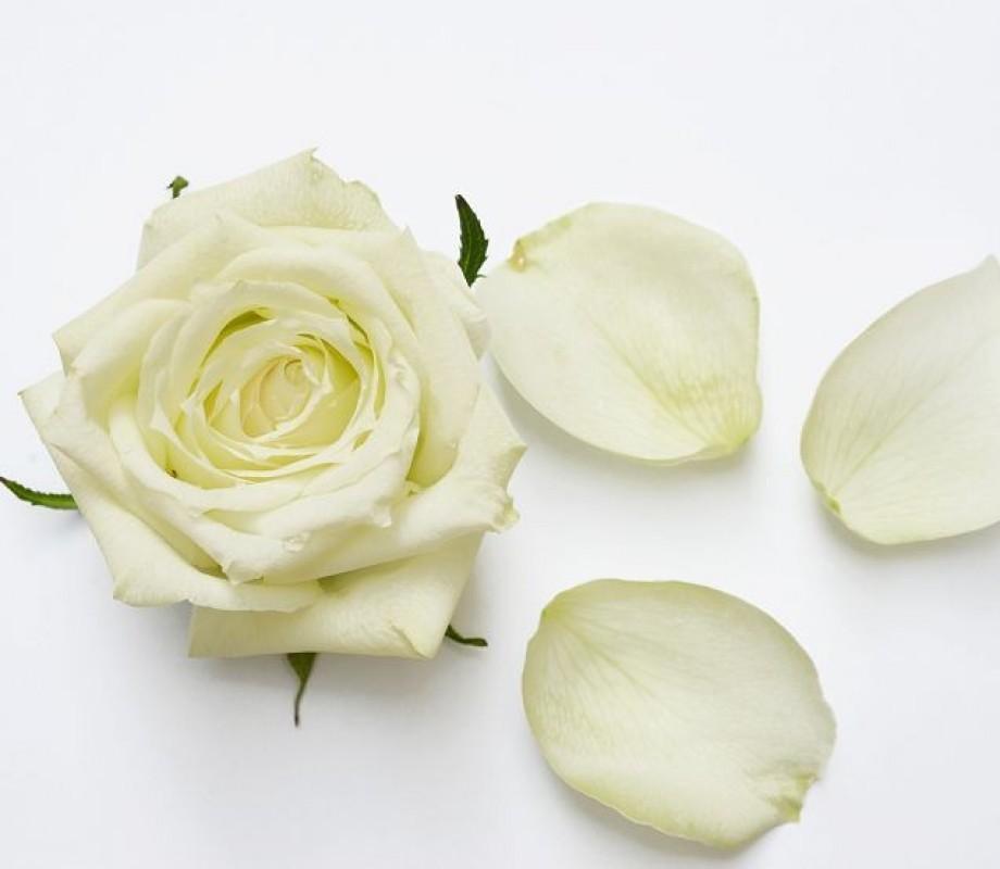 Белая роза в лепестках