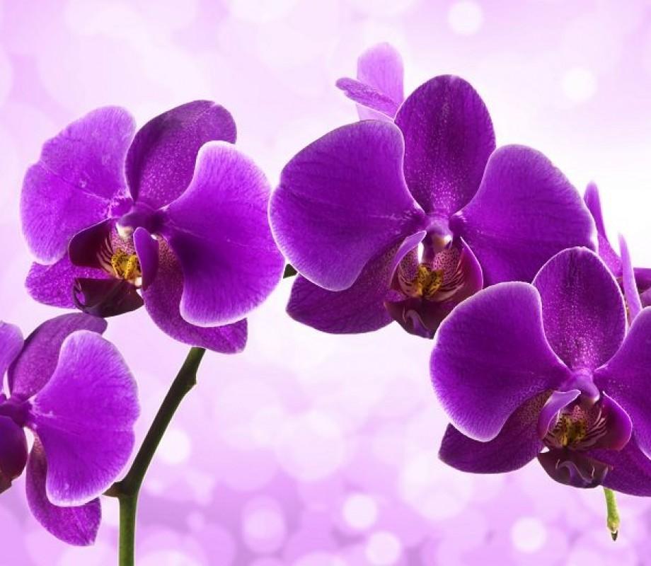 Пурпурная орхидея на фоне бликов