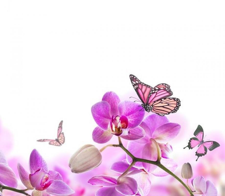 Бабочки на орхидее