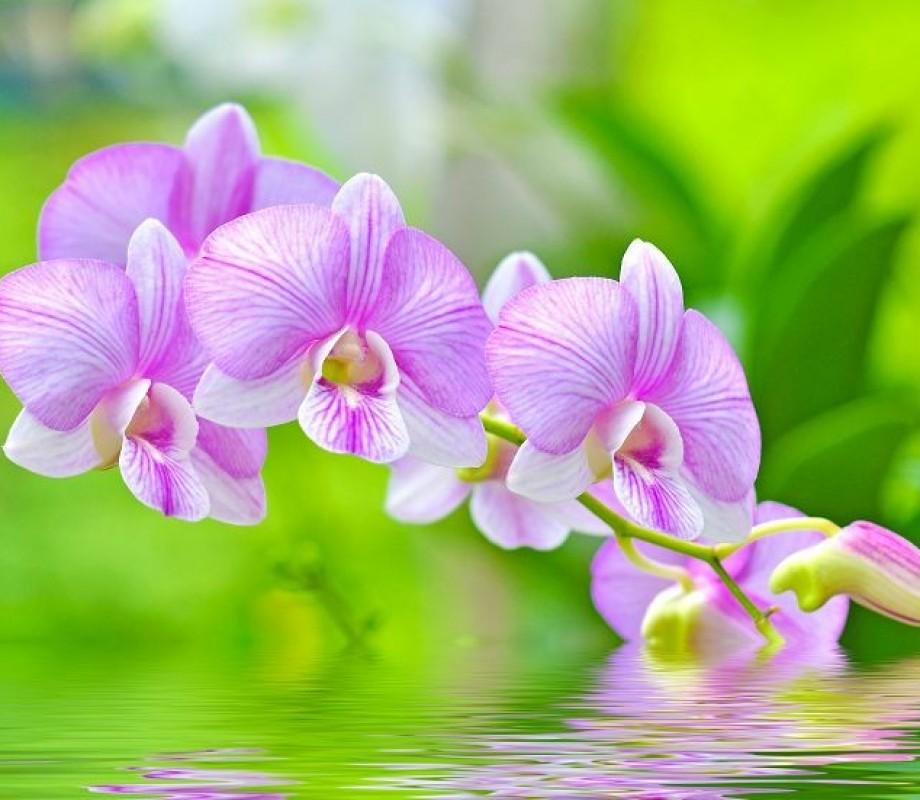 Ветка орхидеи на гладе воды