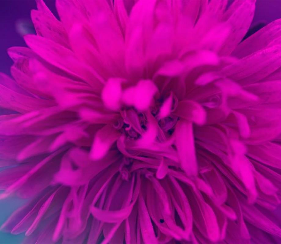 Цветы 187