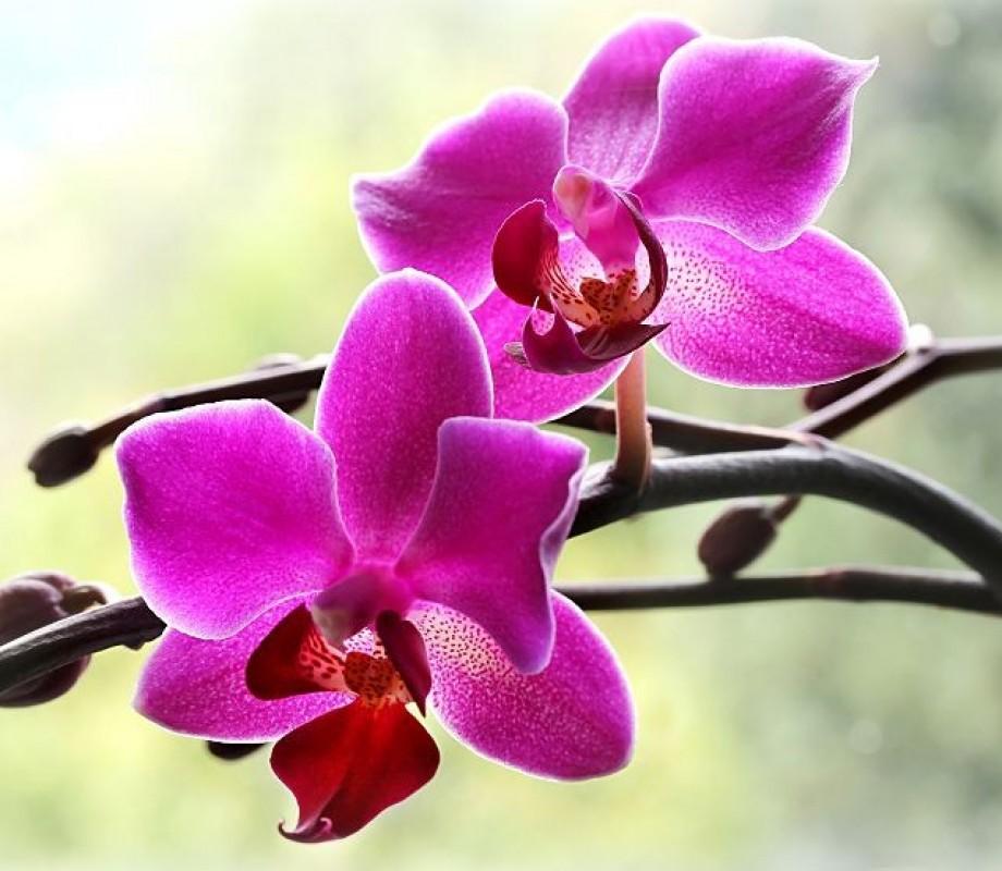 Цветы 230