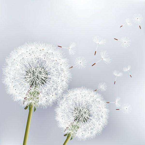 Цветы 238