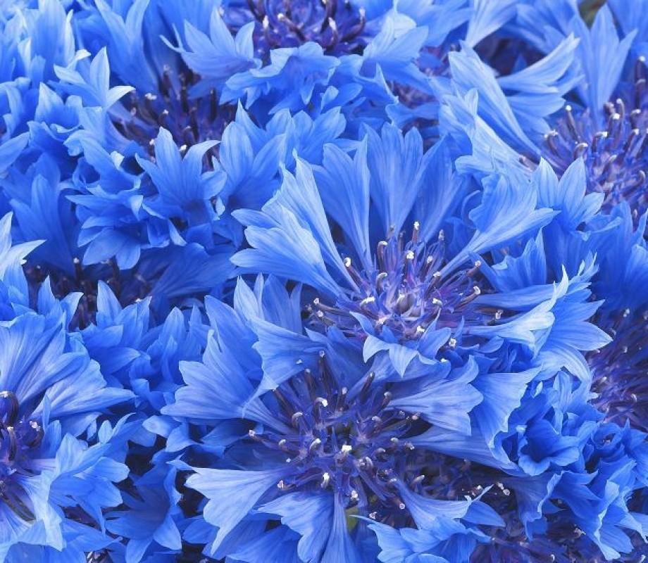 Цветы 242