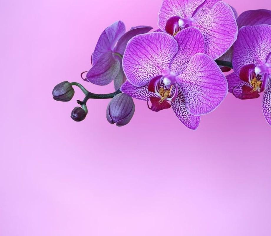 Цветы 244