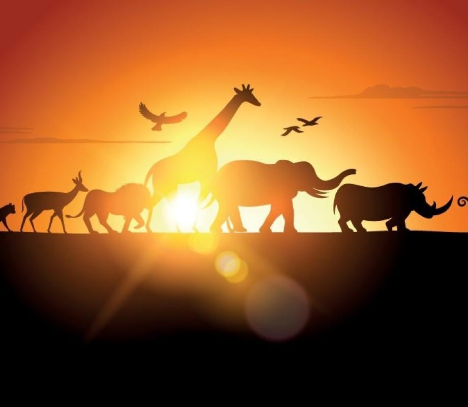 Животные 114