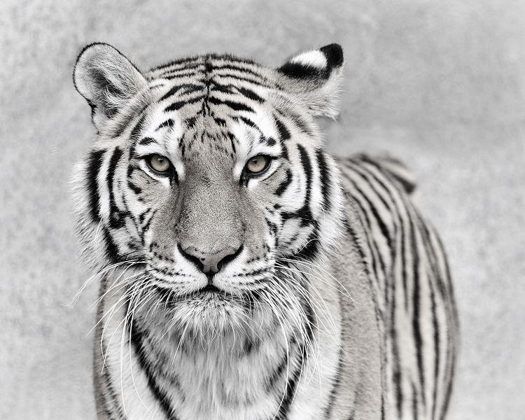 Животные 131