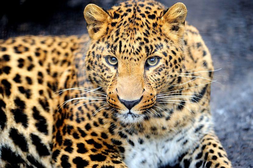 Животные 141