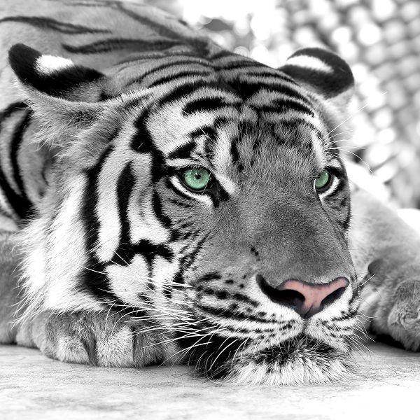 Животные 151