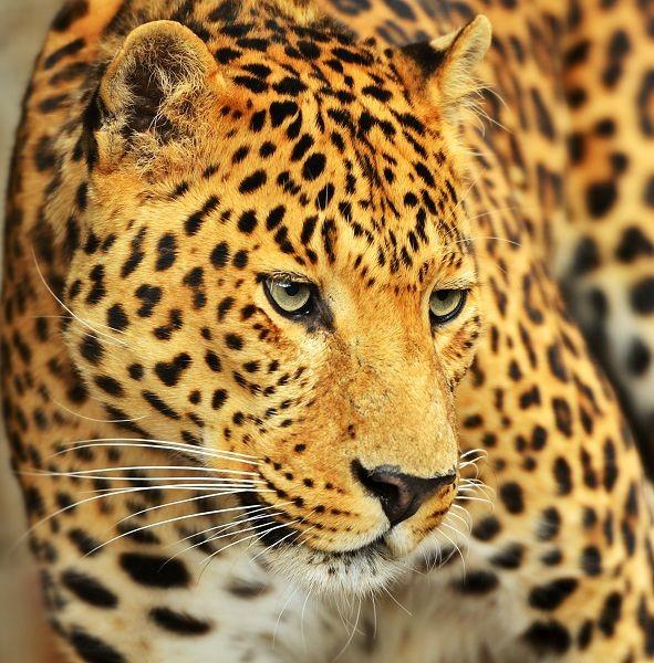 Животные 160