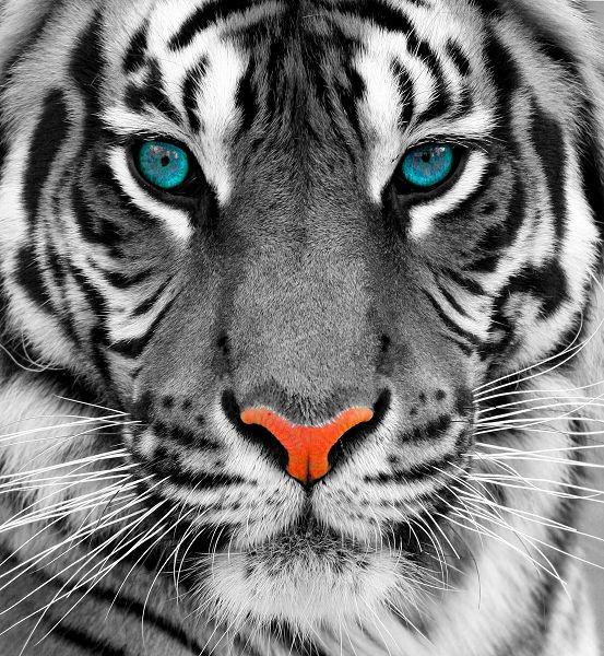 Животные 167