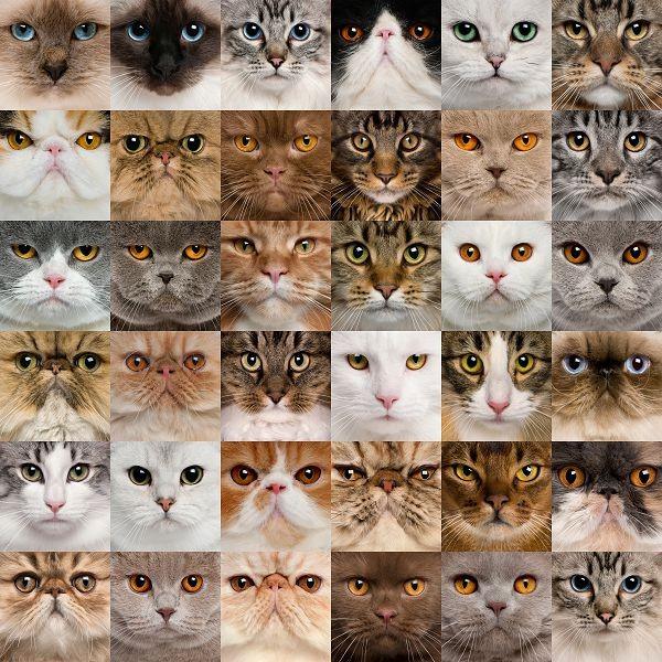 Животные 205