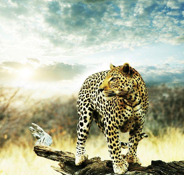 Животные 272