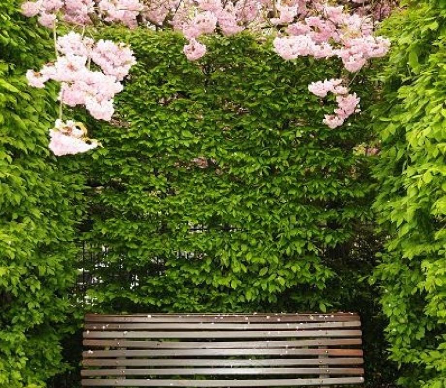 Сады и клумбы 101